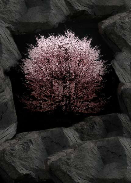 http://ryuta-terajima.ciao.jp/files/gimgs/25_saa.jpg