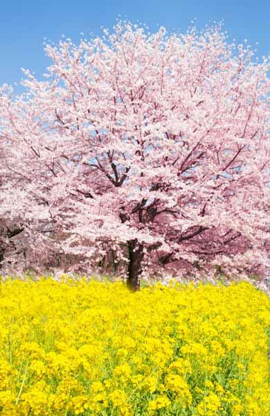 http://ryuta-terajima.ciao.jp/files/gimgs/27_back-27.jpg